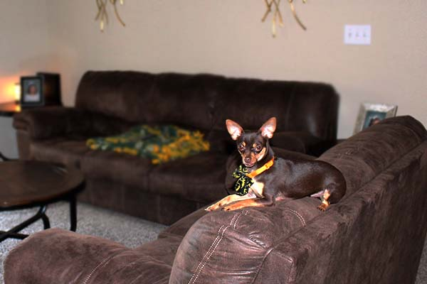 blog - operation-homefront-rent-free-apartments-grand-opening-wounded-veteran-housing-san-antonio-IMG_dog1